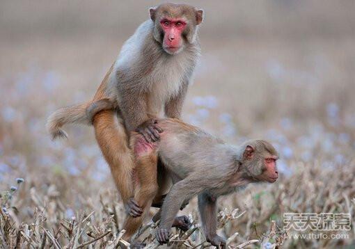 动物界奇葩性行为:雄性受孕产后代