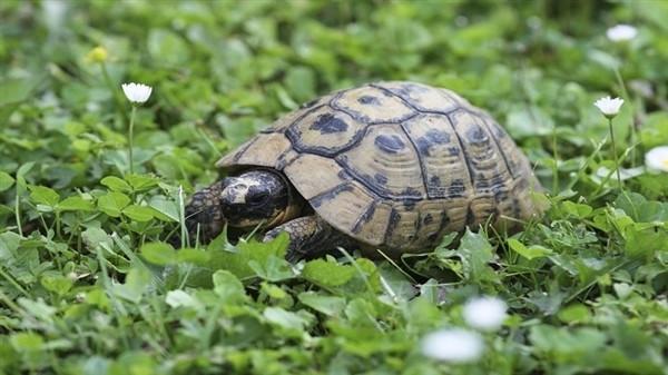 乌龟为什么能长寿?两大秘诀 - 春风扶红桃园花 - 春风扶红桃园花