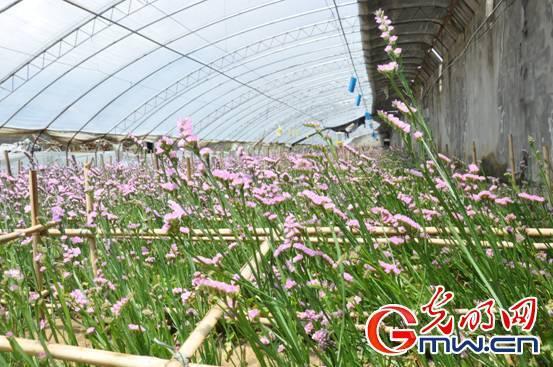 光明网讯 岗德林村距拉萨70公里,是拉萨市民的菜篮子,也是西藏最大的蔬菜鲜花种植基地。岗德林村目前拥有1260栋温室大棚,种植西红柿、黄瓜、茄子、葡萄等蔬菜水果,以及月季、勿忘我等鲜花;年产无公害蔬菜花卉上万顿,占拉萨市场份额的4%。