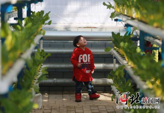 南和县农业嘉年华的立体管道水培植物吸引了一位小朋友.
