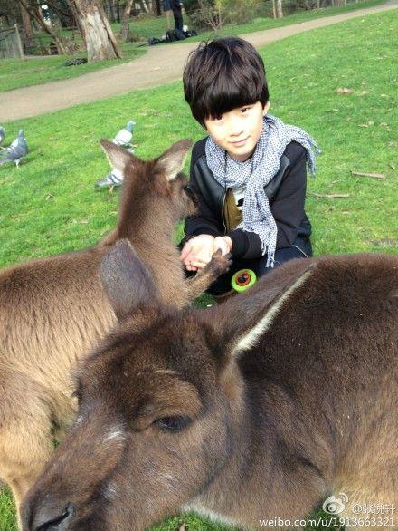 不同种类的小动物做朋友