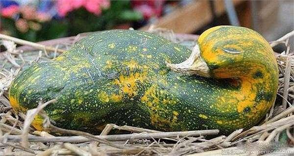 地瓜能做成什么动物造型